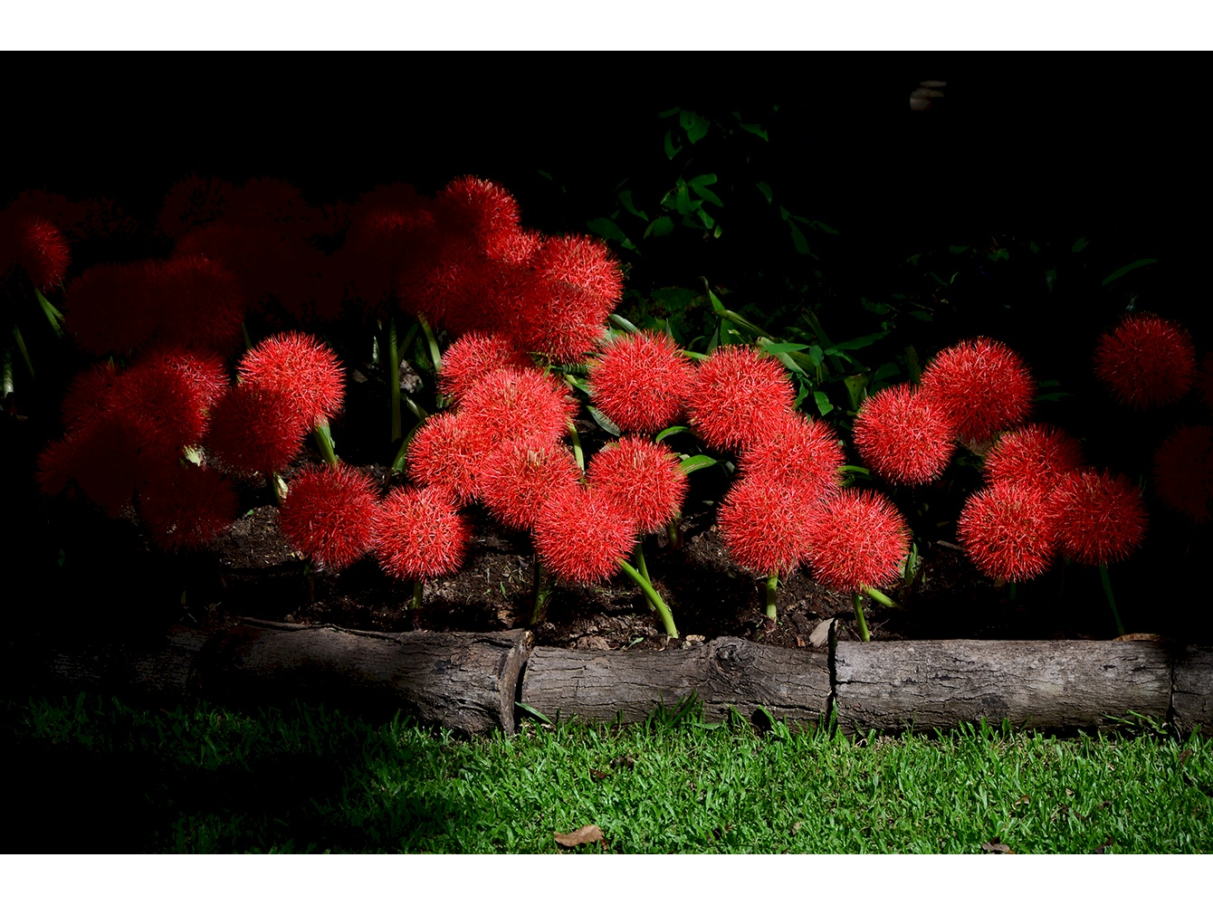 Red blossom in shadow image